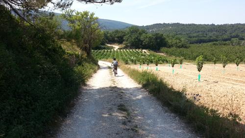 Lil' L Biking back from Bonnieux, Provence, France 2013 2