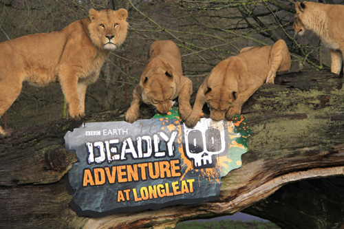 Longleat Deadly 60 500