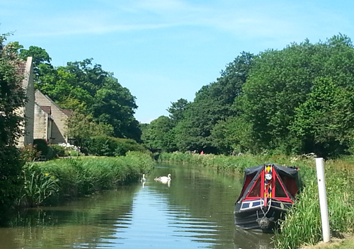 Kennet and Avon Canal with Swans - June