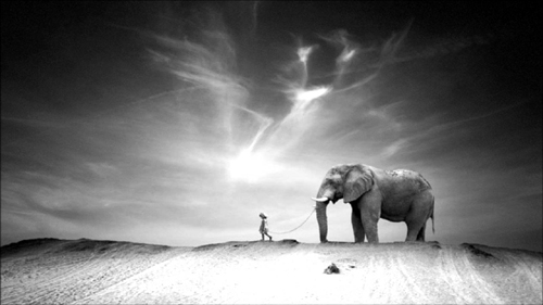 Ten Walls Walking with Elephants 1
