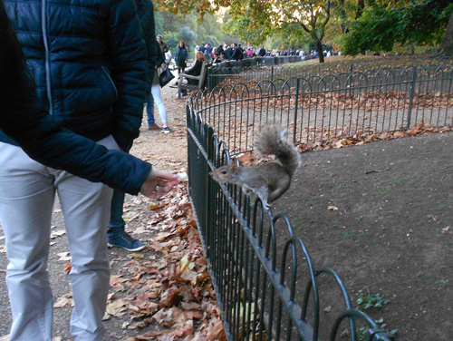 Squirrel in Regent's Park