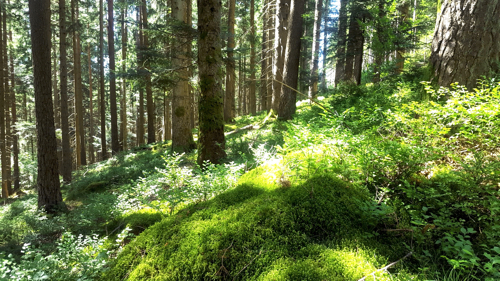 The Black Forest Germany >> A Vegan Vacation In The Black Forest Germany Bit Of The